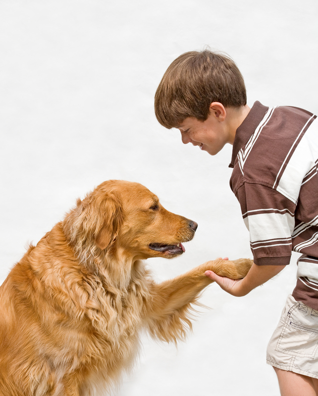http://www.dreamstime.com/royalty-free-stock-images-little-boy-shaking-dog-image5666899