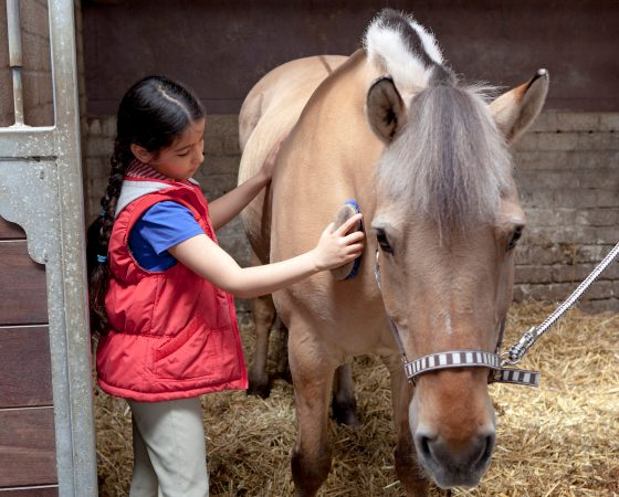 Horses Inspire!